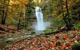 Обои лес, листья, деревья, камни, скалы, водопад, Осень