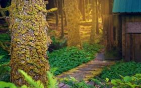 Обои лес, лучи, свет, природа, хижина