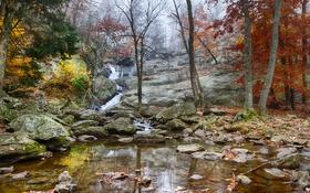 Обои лес, осень, скалы, деревья, ручей, камни