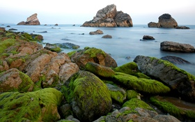 Обои rocks, shore, Sea, moss, algae