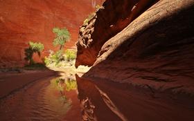 Картинка река, ручей, дерево, скалы, каньон, ущелье