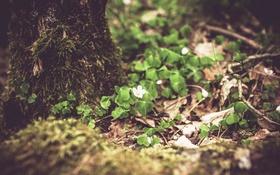 Картинка лес, природа, весна