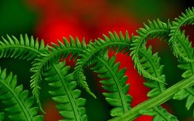 Обои растение, природа, листья