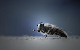 Обои макро, муха, фон