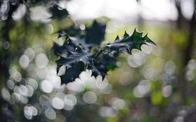 Обои лес, лист, зеленый, листок, боке