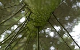 Картинка макро, природа, дерево