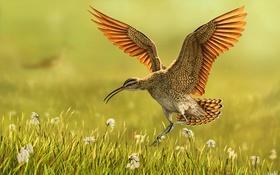Картинка трава, птица, полёт