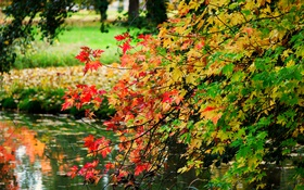 Обои листья, деревья, ветки, парк, отражение, река, зеркало