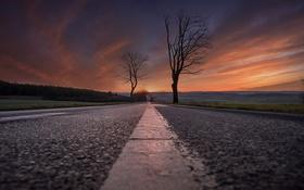 Обои закат, деревья, дорога