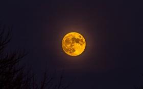 Обои ночь, луна, спутник, силуэты
