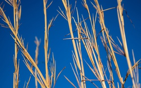 Обои растение, фон, небо, макро