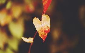 Картинка оранжевый, лист, листок