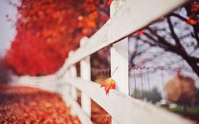 Картинка лист, забор, осень