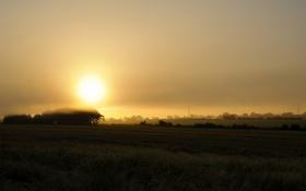 Картинка поле, пейзаж, туман, Pale Morning