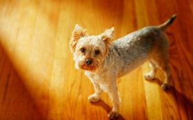 Картинка собака, друг, взгляд
