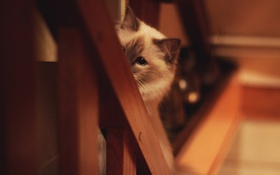Обои кошка, взгляд, фон, размытость