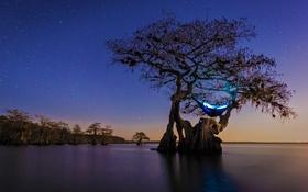 Обои кемпинг, гамак, звезды, ночь, США, старый кипарис, дерево