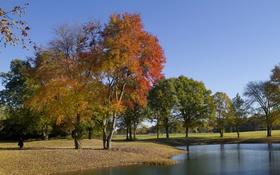 Обои пруд, парк, деревья, осень