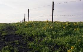 Обои трава, небо, поле, сельская местность, забор, цветы