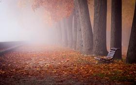 Обои листья, город, осень, скамья, туман, улица
