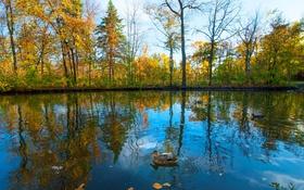Картинка осень, небо, деревья, пруд, парк, птица, утка