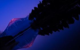 Обои Фуджи, озеро, Япония, деревья, природа, Japan, вулкан