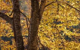 Обои осень, листья, дерево, ствол