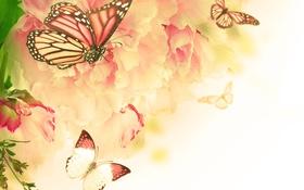 Обои бабочки, цветы, цветение, гвоздика, веточки