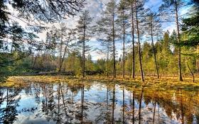 Картинка осень, лес, небо, вода, облака, деревья