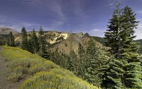 Обои горы, Lassen Volcanic National Park, деревья, трава, Калифорния, лес, США