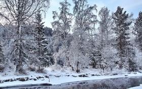 Обои зима, лес, снег, речка, деревья