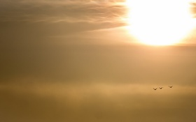 Обои небо, птицы, природа