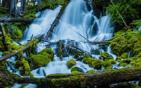 Картинка лес, деревья, река, камни, мох, поток
