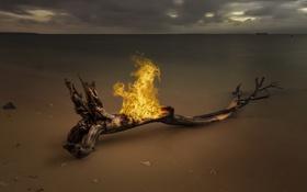 Картинка море, дерево, огонь, берег
