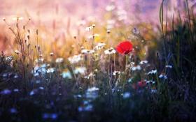 Обои природа, трава, цветы