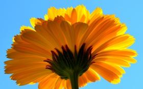 Обои цветок, небо, природа, лепестки