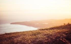 Картинка море, трава, берег, горизонт