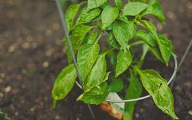 Обои листья, капли, растение, зеленые
