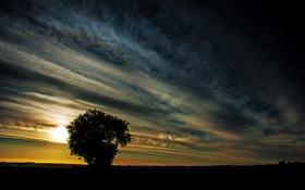 Обои небо, пейзаж, закат, дерево, силуэты