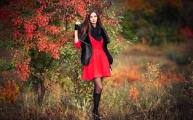 Картинка осень, в красном, на природе