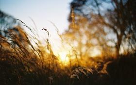 Обои солнце, дерево, стебли, куст, боке