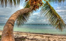 Обои пальма, облака, небо, пирс, море