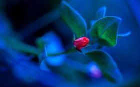 Обои цветок, листья, макро, растение