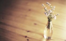 Обои фон, цветы, минимализм