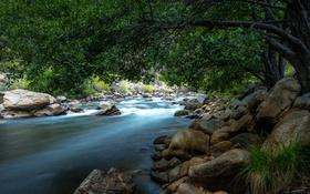 Обои лес, деревья, ветки, река, камни, течение, листва