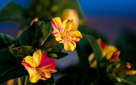 Картинка сад, лепестки, природа, листья