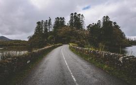 Обои холм, озеро, дождливый, короткая стена, коряги, дорога, деревья
