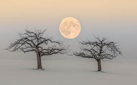 Картинка деревья, природа, луна