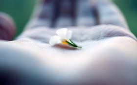 Обои цветок, ладонь, макро