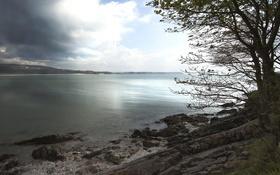 Картинка облака, озеро, дерево